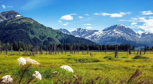 Бесплатное изображение: поле, луг, трава, растение, небо ... | 357x650