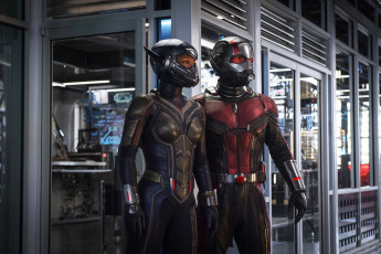 обоя кино фильмы, ant-man and the wasp, ant-man, and, the, wasp