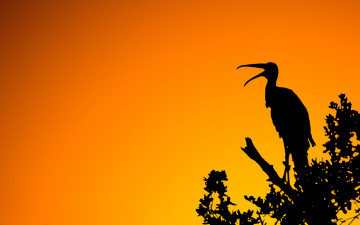 обоя woodstork, sunset, векторная, графика